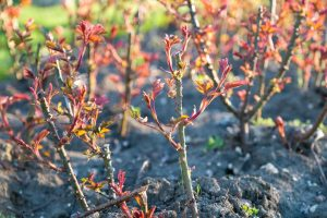 How Pruning Produces Results